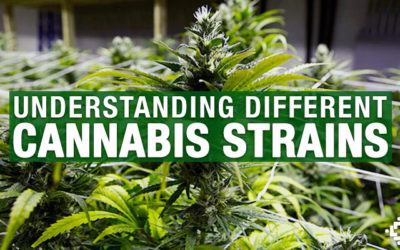 What do the different types of marijuana strains mean?