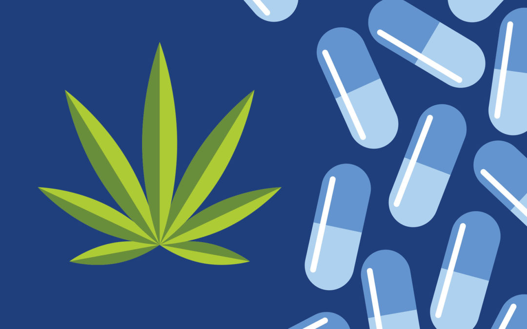 Cannabis's Role in Combatting Opioid Abuse