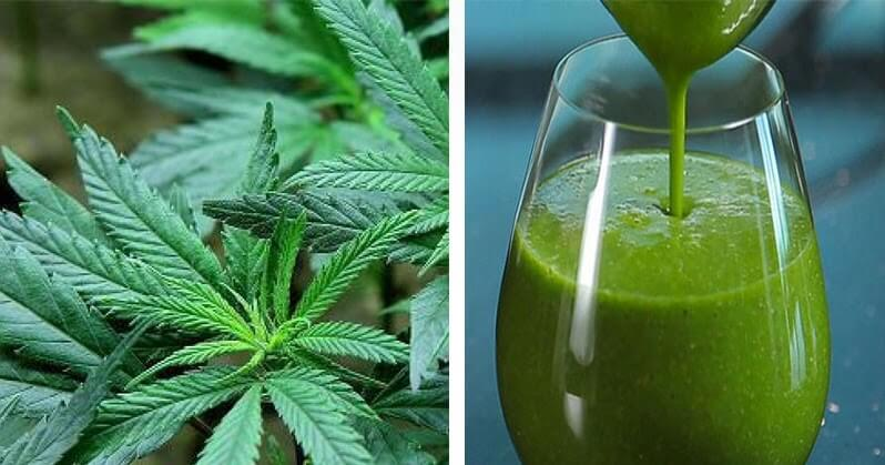 Health Benefits of Raw Cannabis-Juicing with Cannabis