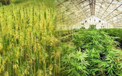 Fed Appeals Court to Hear Hemp Industry Lawsuit Challenging DEA's Position on CBD